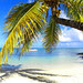 #Palmtree on #Paradise White #Exotic #Beach on #Mauritius - by Bluedarkat Lem
