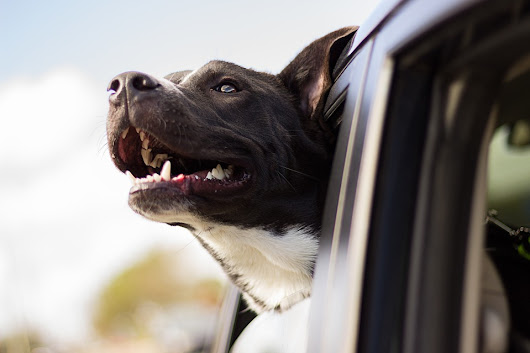 Temperature Monitoring Systems for Pets in RVs, Vehicles and Homes - TiresAndTails.com