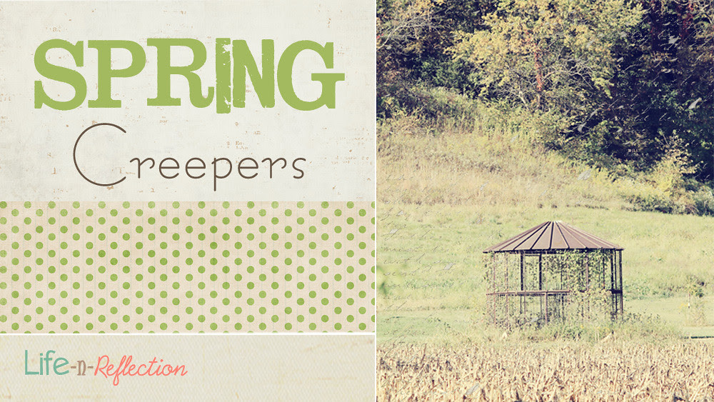 spring creepers