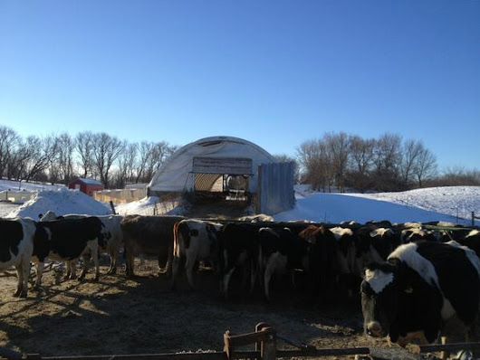 Dairy Farming in Extreme Cold