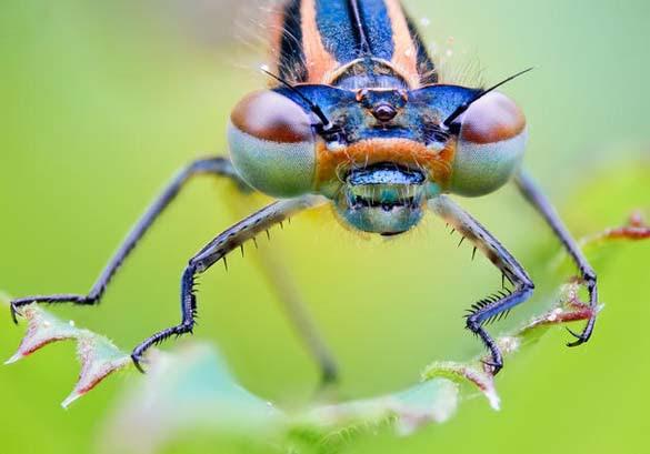 Εκπληκτικές macro φωτογραφίες εντόμων (17)