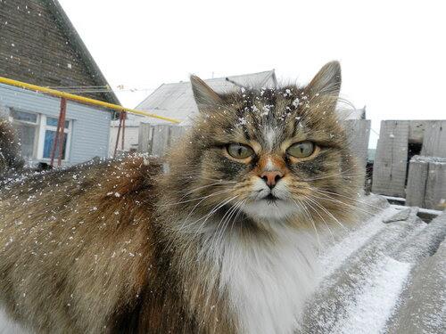 Март  Снегопад