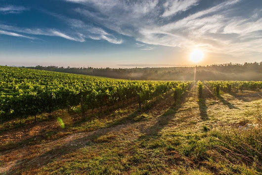 Glass Half Full: World Wine Regions You Must Visit - The Bucket List Project