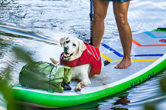 Doggy Paddle: Tips To SUP With Your Pup