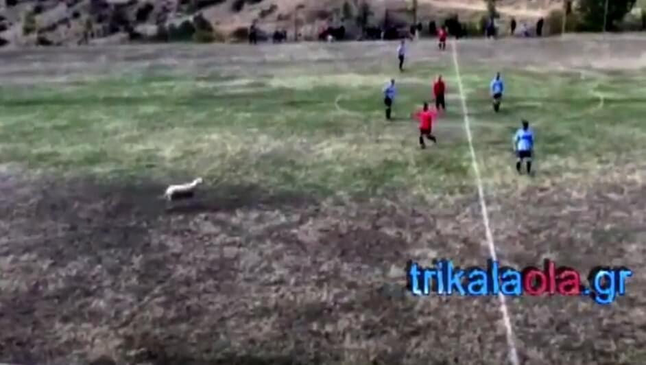 Απίστευτο! Παίχτες κυνηγούσαν προβατίνα την ώρα του αγώνα σε γήπεδο των Τρικάλων… (2 βίντεο)