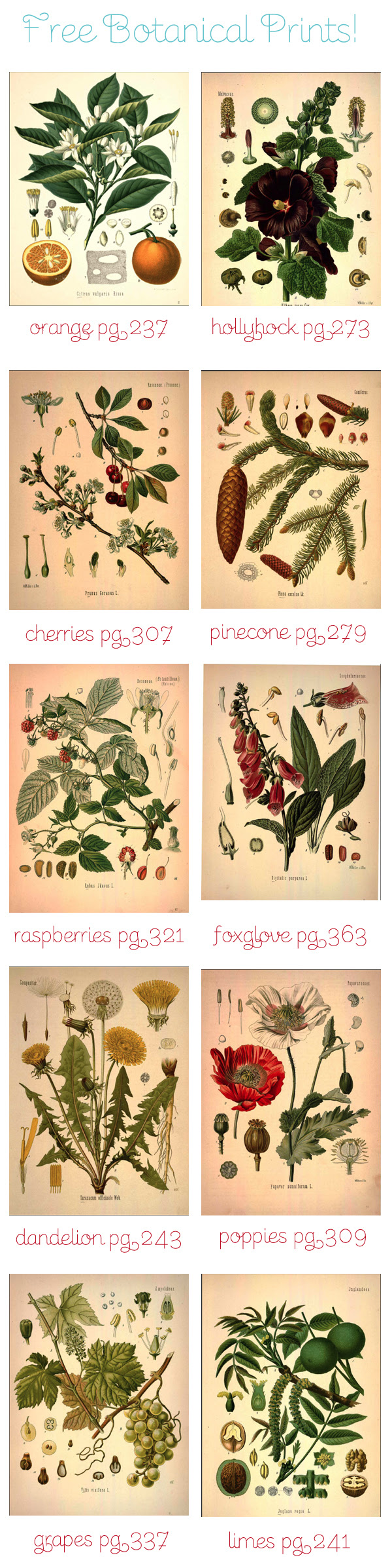 free-botanical-art