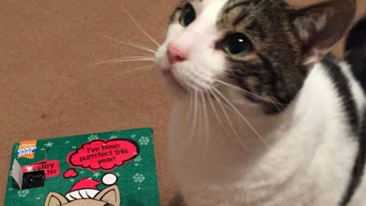 No ID cat almost misses out on advent calendar gift - BBC News