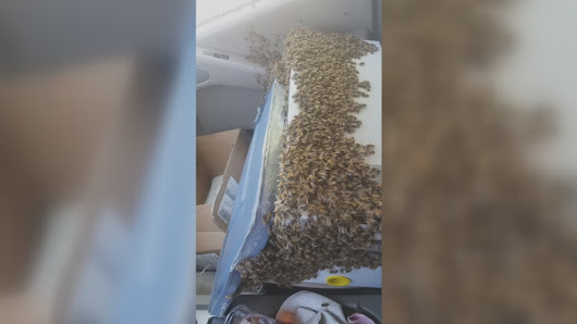 Waynesville man drives 40 miles with 3,000 bees loose in truck cab