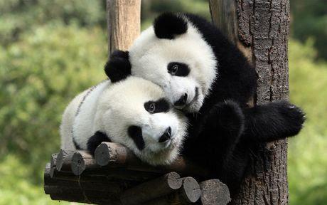 Ghen tị trước tình yêu của các cặp đôi trong thế giới động vật