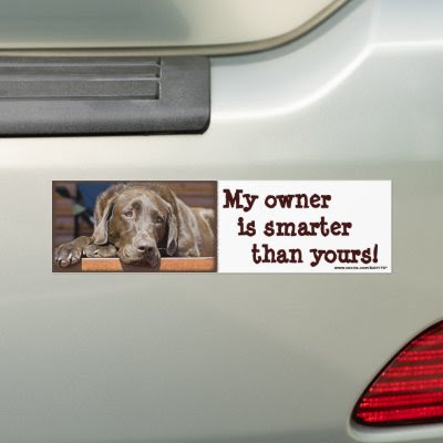 Smart Chocolate Lab bumpersticker, digital photograph, picture, photograph, dog, k9,