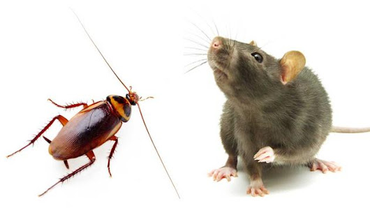 Pest(s) of the New Year: Roaches AND Rodents?!?! - Buzzkill Pest Control