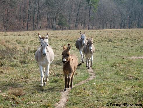 The Daily Donkey 51