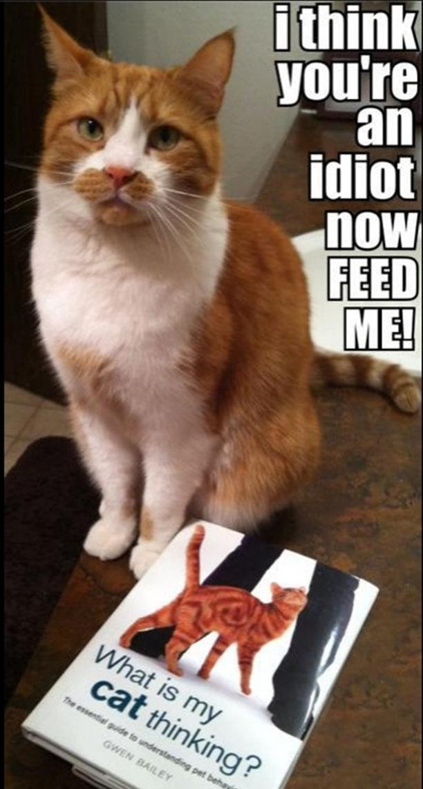 Irti Funny Picture 2688 Tags Cat I Think You Are An Idot Feed