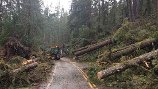 Meteorological Mystery Surrounds What Caused Massive Tree Fall in Northwest Washington | The Weather Channel