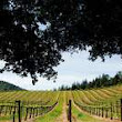 Passport to Dry Creek Valley: 25 years of great wine, food