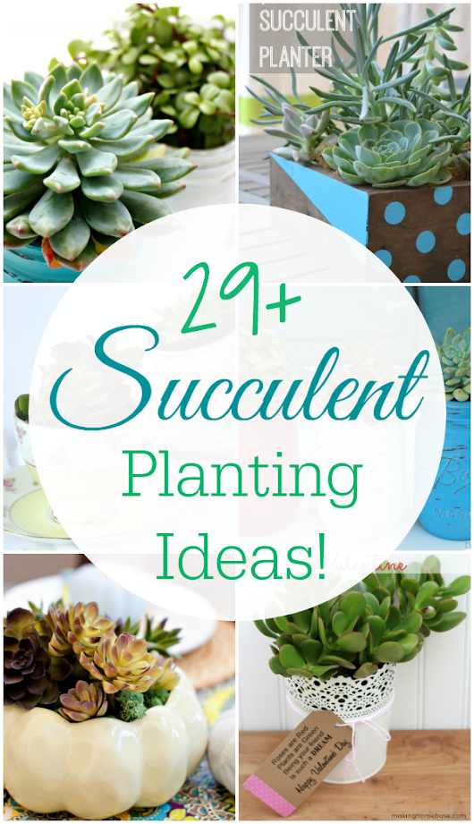 29 Amazing Succulent Planting Ideas - Mom 4 Real