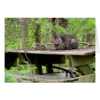 Feral Cat in Woods Greeting Card