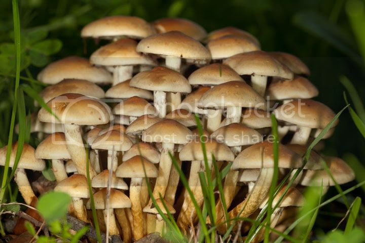 photo cogumelos_zps63aa6cdf.jpg