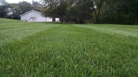 Turf Talk - Evaluating Current Lawn Conditions