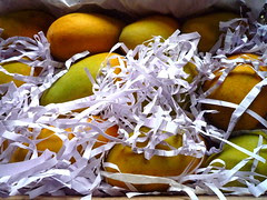 delicious mangoes, shredded paper