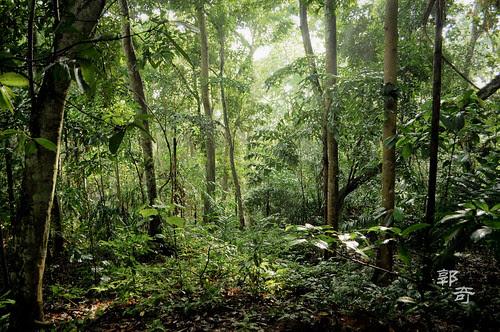 Jungle Walk #1
