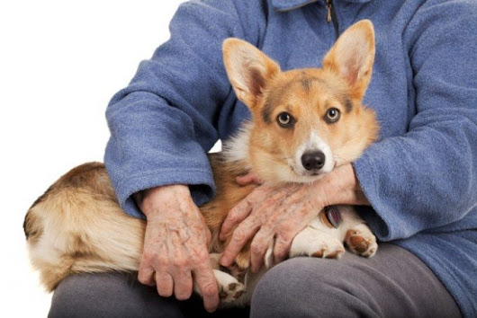 Lap Dogs 101 - The Top 15 Best Dog Breeds for Families & Seniors | MrsDoggie