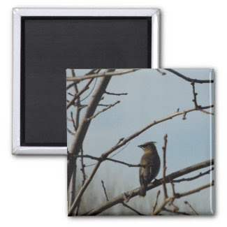 Small Bird in Bare Tree in Winter 2 Inch Square Magnet