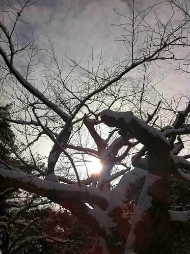 A tree at Oyama Shrine