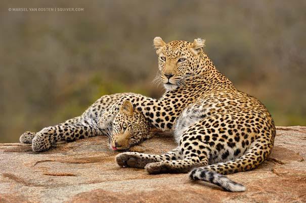 Υπέροχες φωτογραφίες φιλίας ζώων που θα σας φτιάξουν τη διάθεση (5)