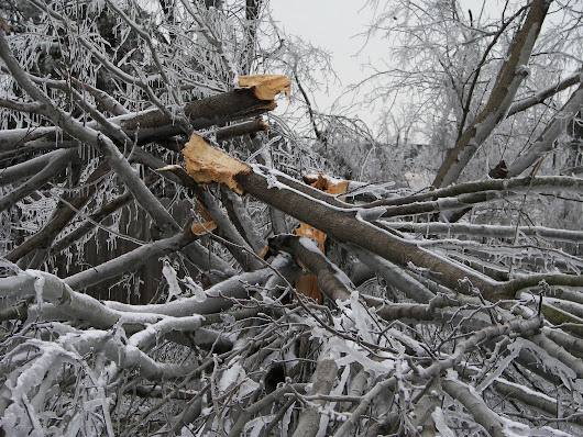 Denver Tree Services Include Storm Cleanup