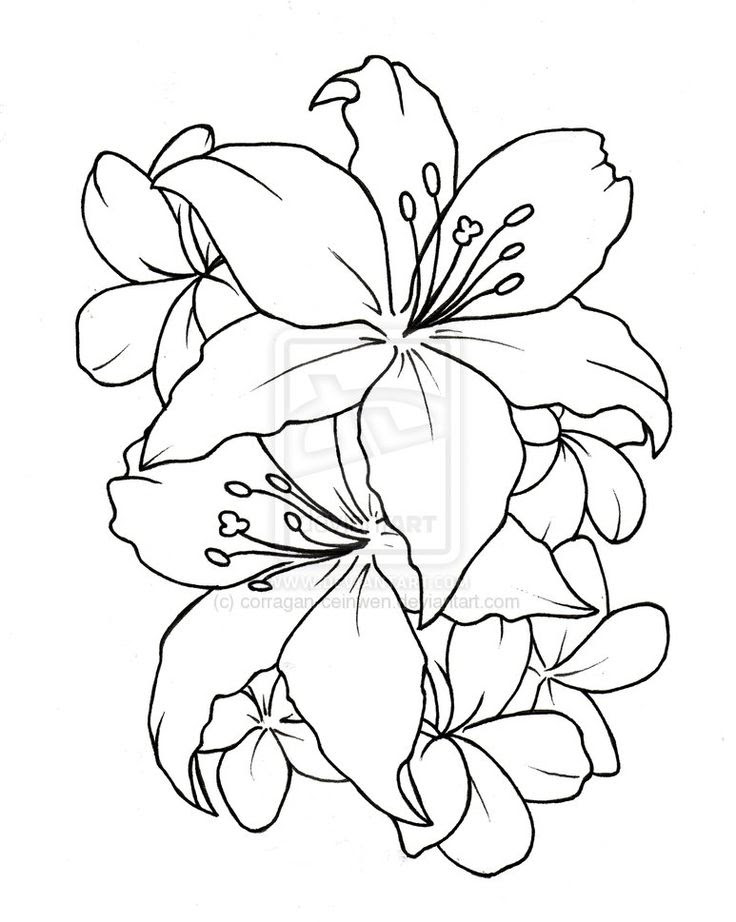 Simple Flower Designs For Pencil Drawing At Getdrawingscom Free
