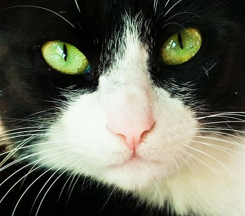 jellicle cats