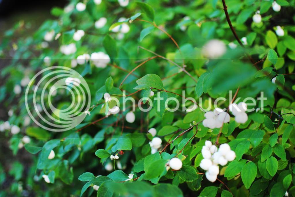 photo DSC_0054_zpsadfd4cab.jpg