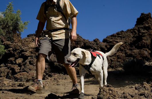 Hiking the trails with your dog