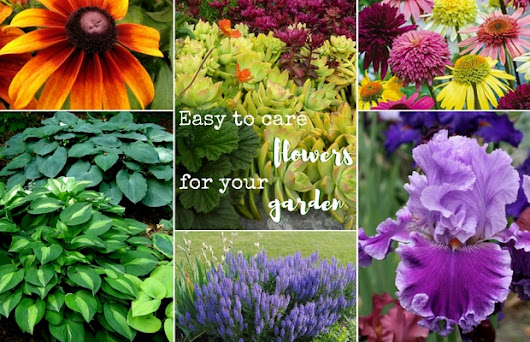Easy to care flowers you should have in your garden