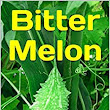 Bitter Melon - Kindle edition by Om Krishna Uprety. Health, Fitness & Dieting Kindle eBooks @ Amazon.com.
