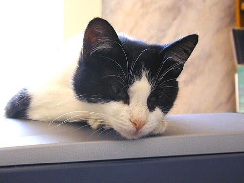 Getting-Sleepy