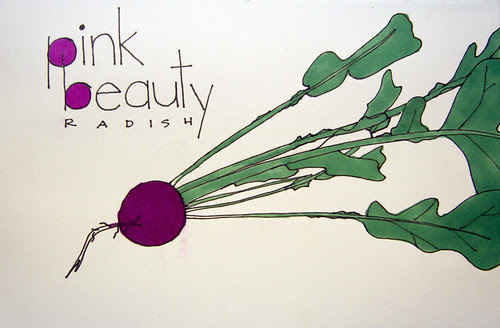 Pink Beauty - 356/365