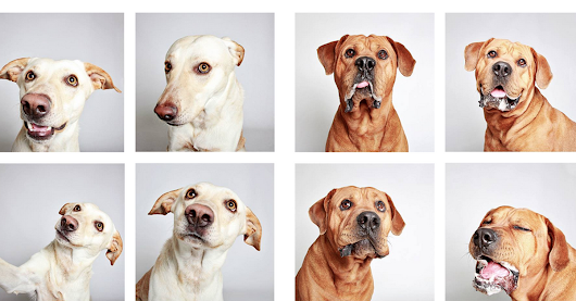 Shelter dogs in a photo booth will be your new favorite thing