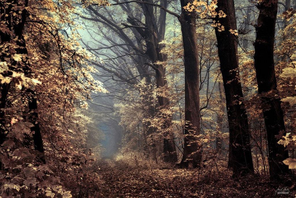 Os bosques outonais oníricos de um fotógrafo tcheco 08