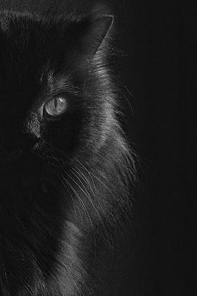 Kucing Lucu Hitam