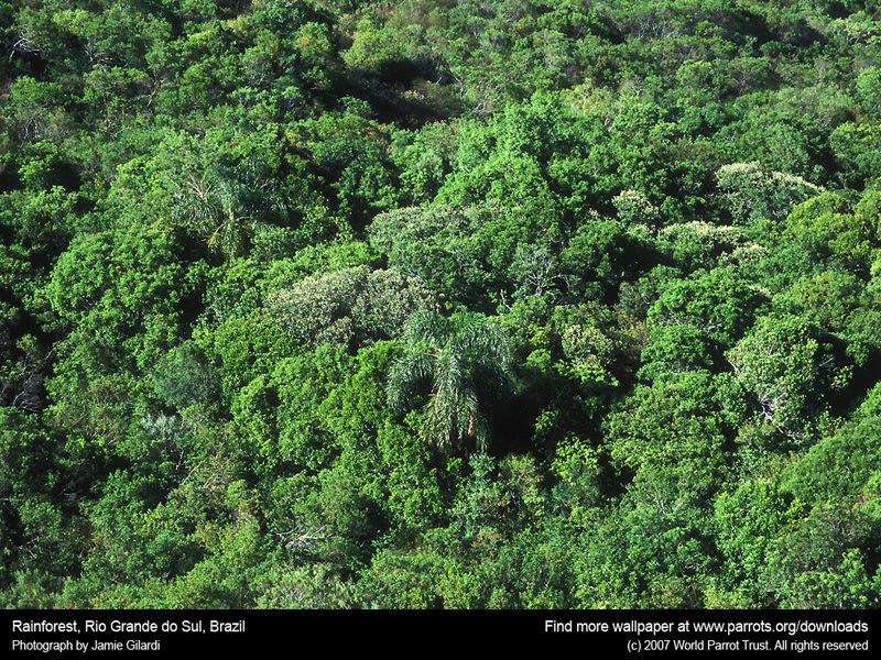 rain forest wallpaper. The Rainforest