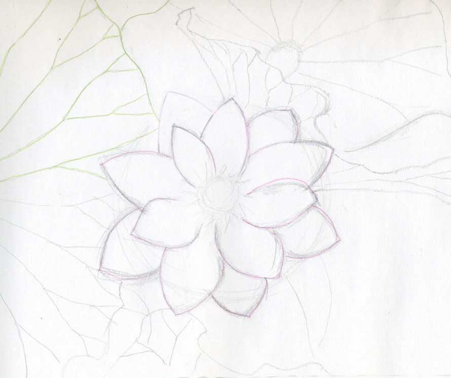 Top Lotus Flower Sketch Images Top Collection Of Different Types Of Flowers In The Images Hd