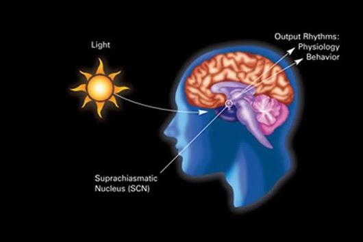 Depressive Behaviors Caused by Disrupting Brain's Internal Clock: Mouse Study