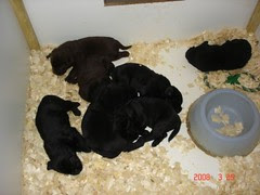 Mutt's pups at 3 wks