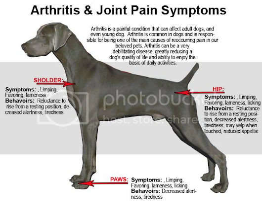 Arthritis Medicine For Dogs - Joint Security For Your Animal