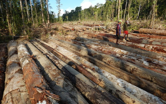 US retail one end of supply chain for illegal PNG logs