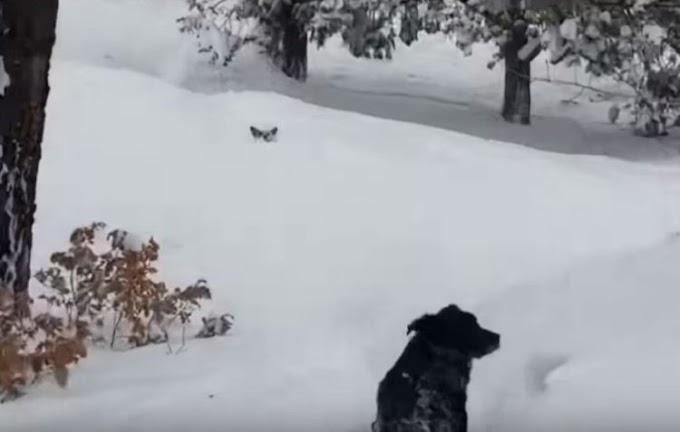 Queda atrapado en la nieve por ir a visitar a su amiga pero ella resultó ser la mejor anfitriona