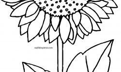 Gerçekçi Ayçiçeği Boyama Sayfası