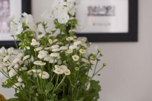 white flowers, green leaves
